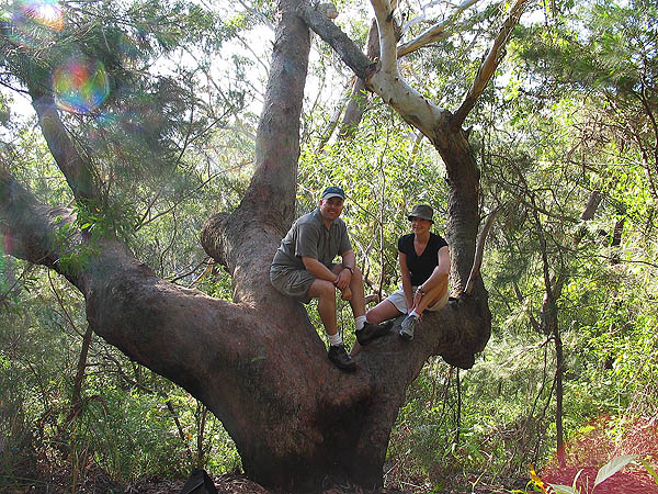 Australia 2004: Curtis and Jane in Tree