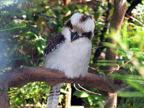 Australia 2004: Taronga Bird 02