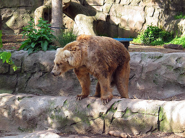 Australia 2004: Taronga Kodiak Bear
