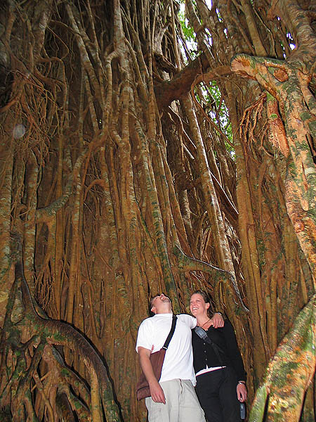 Australia 2004: Cathedral Fig Tree Curtis and Jane