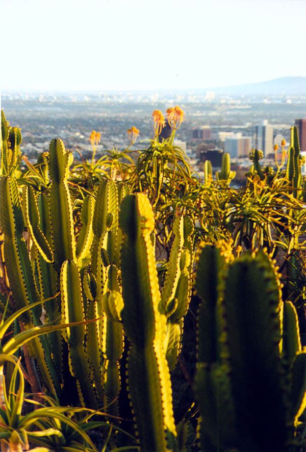 Getty 2000: Cactus and LA